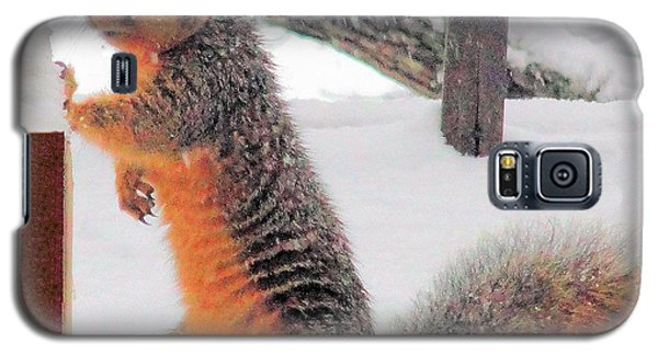 Galaxy S5 Case featuring the photograph Squirrel Checking Out Seeds by Janette Boyd