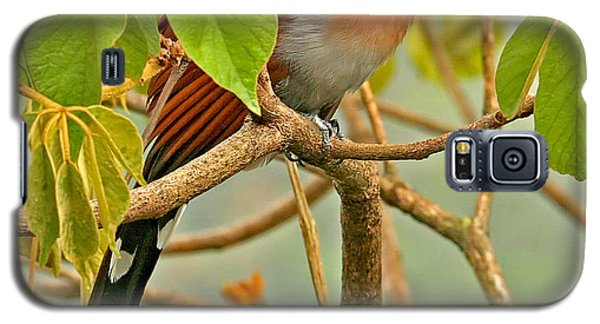 Galaxy S5 Case featuring the photograph Squirrel Cuckoo In Costa Rica by Peggy Collins