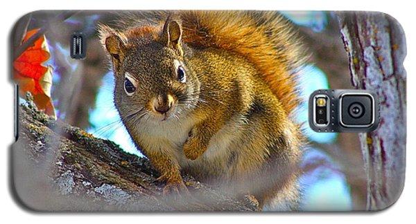 Squirrel Duty. Galaxy S5 Case by Johanna Bruwer