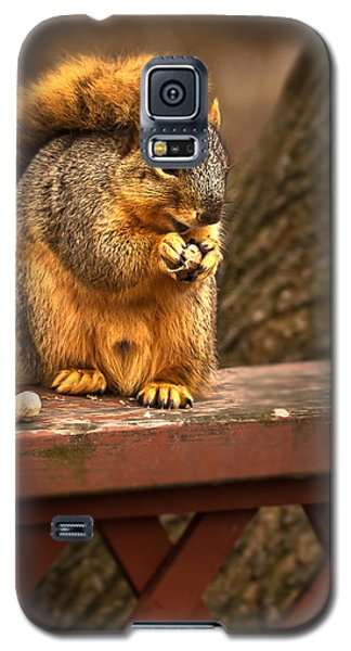 Squirrel Eating A Peanut Galaxy S5 Case by  Onyonet  Photo Studios