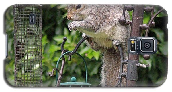Squirrel Eating Nuts Galaxy S5 Case