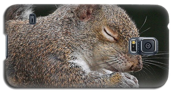 Squirrel Giving Thanks Galaxy S5 Case by Luana K Perez