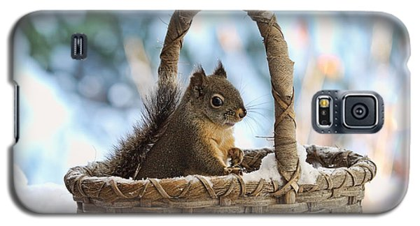 Galaxy S5 Case featuring the photograph Squirrel In A Snowy Basket In Winter by Peggy Collins