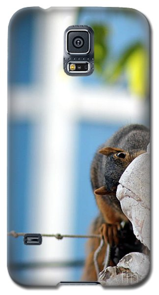 Squirrel In Hiding Galaxy S5 Case