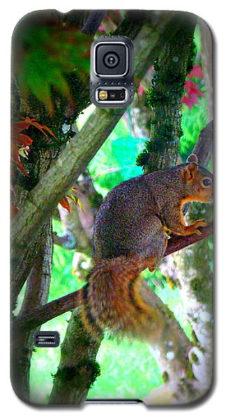 Squirrel In My Tree Galaxy S5 Case