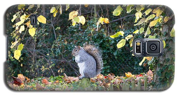 Squirrel Perched Galaxy S5 Case by Matt Malloy