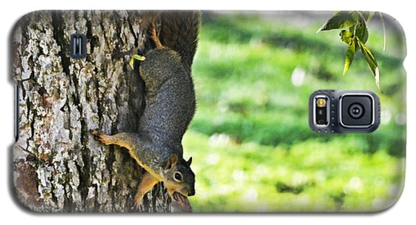 Squirrel With Pecan Galaxy S5 Case