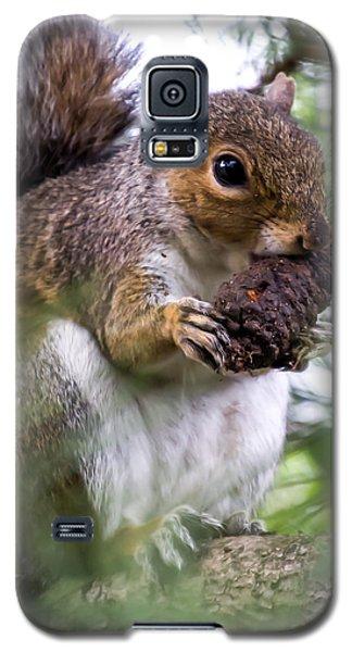 Squirrel With Pine Cone Galaxy S5 Case