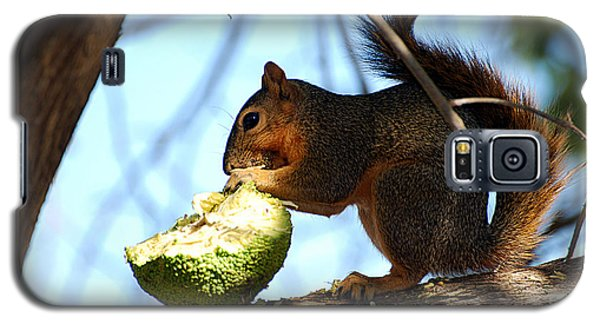 Galaxy S5 Case featuring the photograph Squirrel's Delicacy by Linda Cox