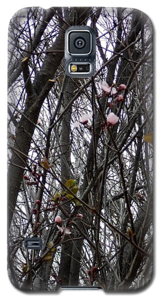 Galaxy S5 Case featuring the photograph Spring Blossoms by Carla Carson
