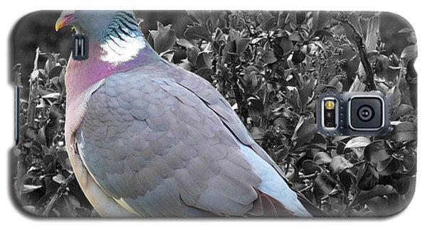 St. Andrews Pigeon Galaxy S5 Case by Deborah Smolinske