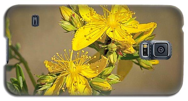 St Johns Wort Galaxy S5 Case by Betty Depee