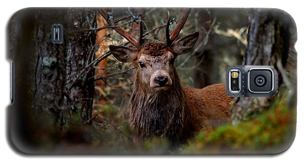 Stag In The Woods Galaxy S5 Case