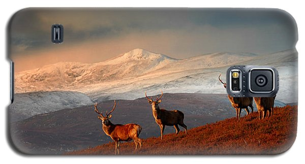 Stags At Strathglass Galaxy S5 Case