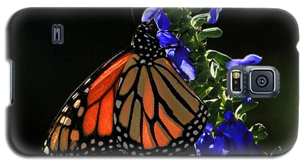 Stained Glass Wings Galaxy S5 Case