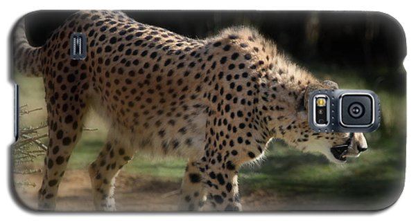 Stalking Cheetah  Galaxy S5 Case