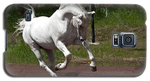 Galaxy S5 Case featuring the photograph Stallion D4052 by Wes and Dotty Weber