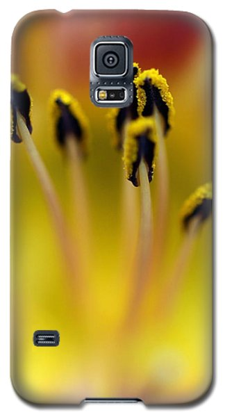 Galaxy S5 Case featuring the photograph Stamina by Debra Kaye McKrill