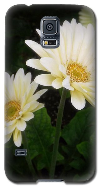 Stand By Me Gerber Daisy Galaxy S5 Case by Lingfai Leung