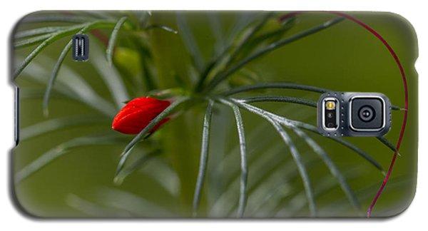 Standing Cypress Bud Galaxy S5 Case
