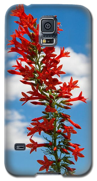 Standing Cypress With Clouds Galaxy S5 Case