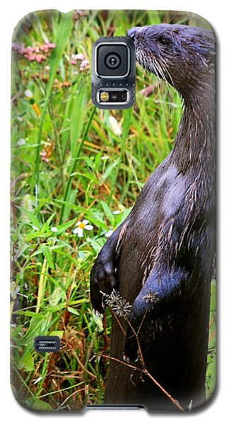 Standing River Otter Galaxy S5 Case