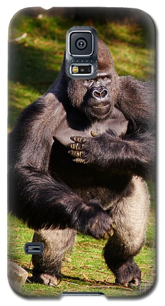 Galaxy S5 Case featuring the photograph Standing Silverback Gorilla by Nick  Biemans