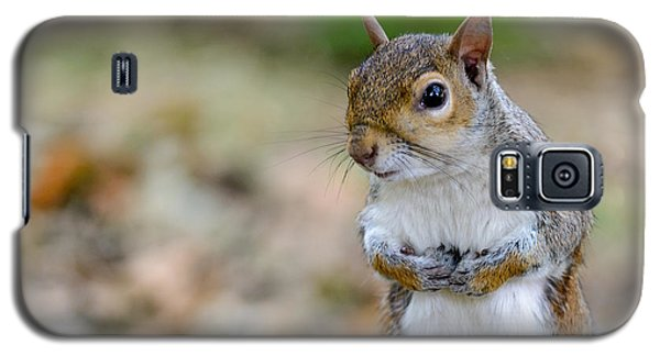 Standing Squirrel Galaxy S5 Case by Matt Malloy