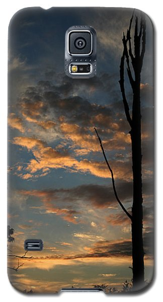Standing Tall Among The Trees Galaxy S5 Case