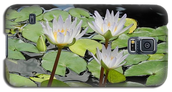 Galaxy S5 Case featuring the photograph Standing Tall by Chrisann Ellis