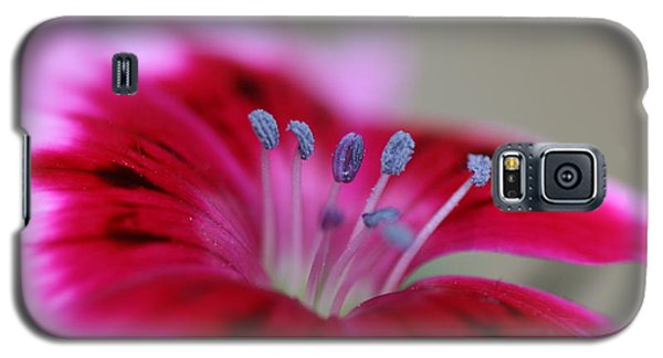 Standing Tall Sweet William Galaxy S5 Case