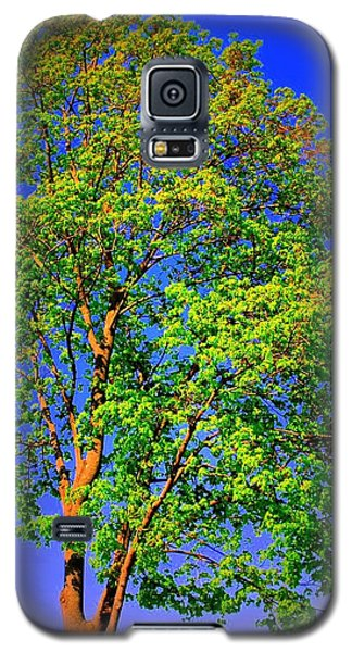Galaxy S5 Case featuring the photograph Standing Tall by Mary Beth Landis