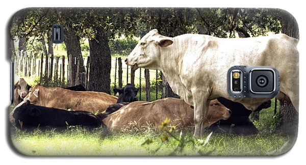 Standing Watch Cattle Photographic Art Print Galaxy S5 Case by Ella Kaye Dickey