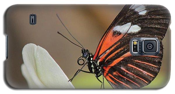 Standup Butterfly Galaxy S5 Case by Bill Woodstock