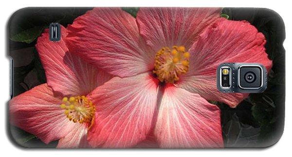 Star Flower Galaxy S5 Case by Barbara Griffin
