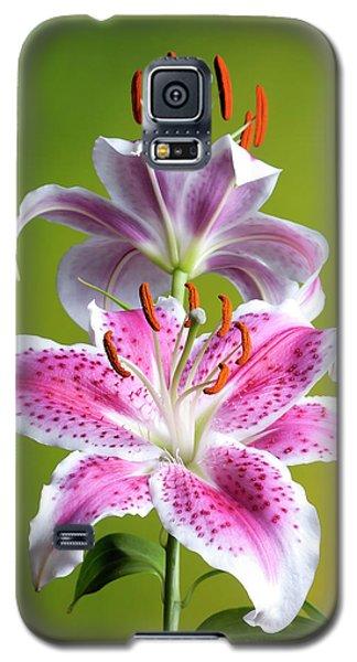 Star Gazer Lily Galaxy S5 Case