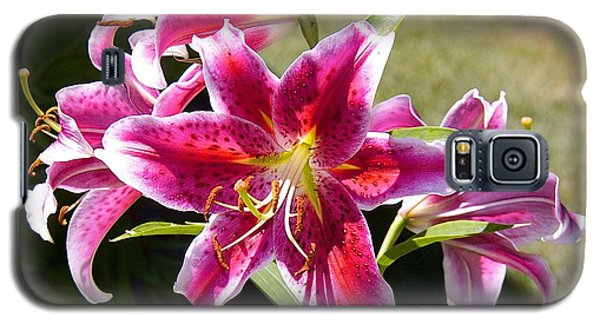 Star Lily In Blazing Color Galaxy S5 Case