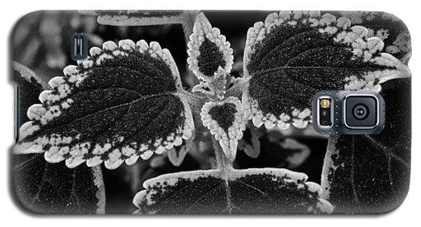 Stardust Petals Galaxy S5 Case