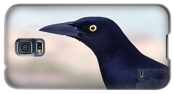 Stare Of The Male Grackle Galaxy S5 Case