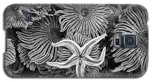 Starfish 3 Galaxy S5 Case