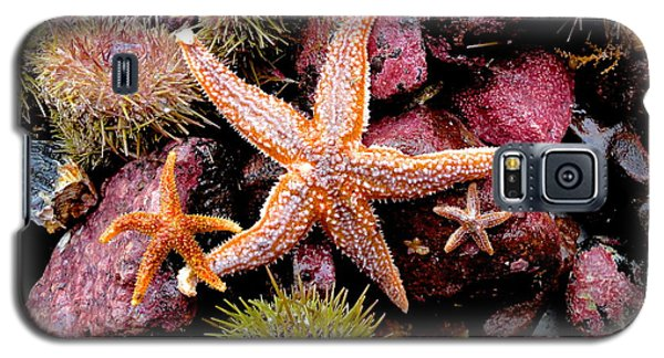 Galaxy S5 Case featuring the photograph Starfish by Sarah Mullin