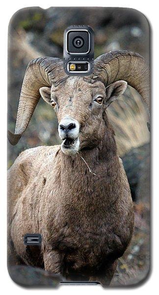 Startled Ram Galaxy S5 Case by Steve McKinzie