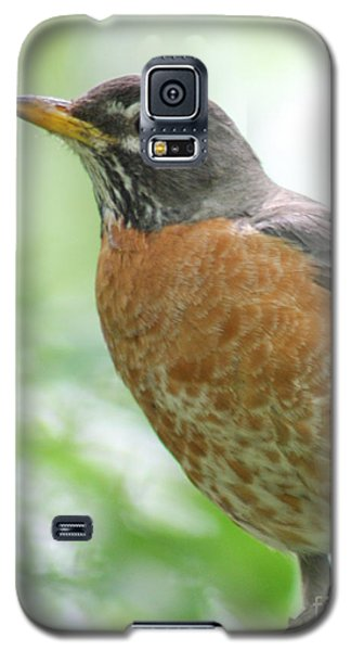 Galaxy S5 Case featuring the photograph Stately Robin by Anita Oakley