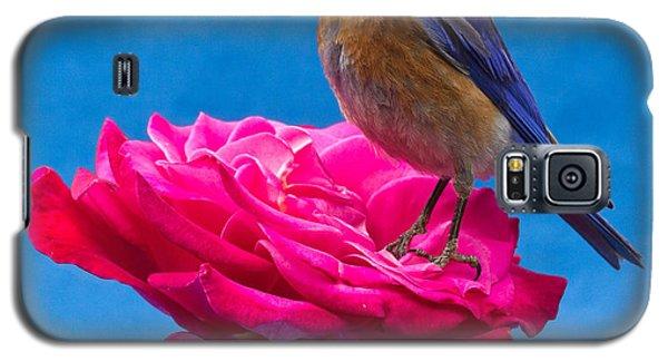Steady Galaxy S5 Case