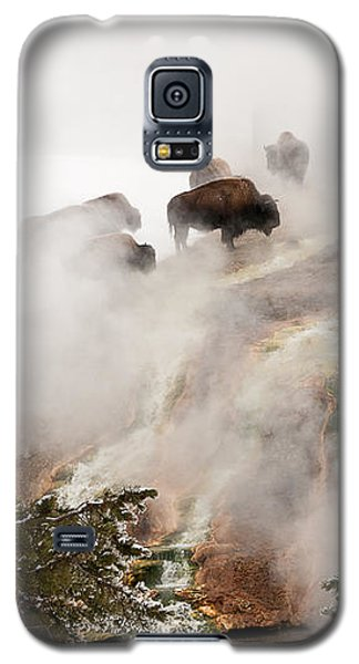 Steamy Bison Galaxy S5 Case