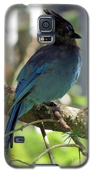 Stellar's Jay Galaxy S5 Case by Chris Anderson