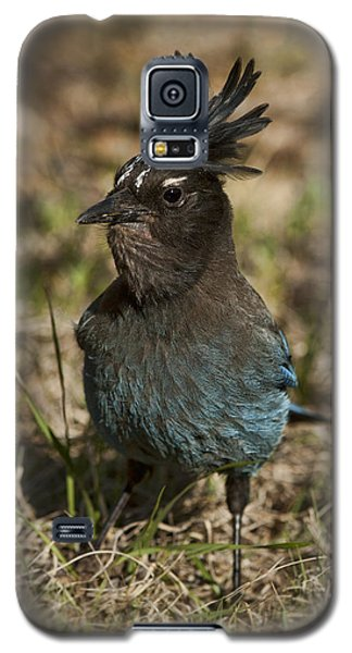 Galaxy S5 Case featuring the photograph Stellar's Jay - Inland Race by Gregory Scott