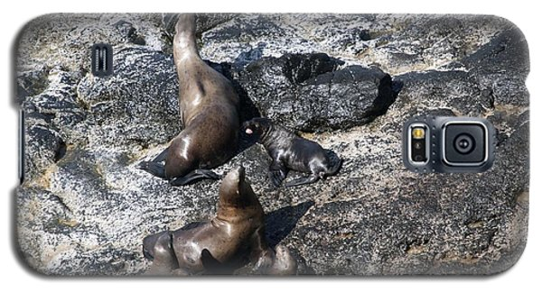 Steller Sea Lion - 0033 Galaxy S5 Case by S and S Photo