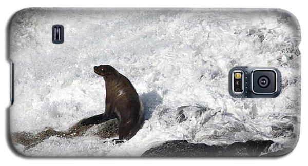 Steller Sea Lion - 0034 Galaxy S5 Case by S and S Photo