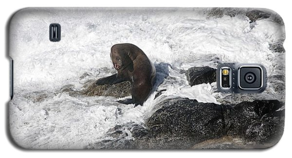 Steller Sea Lion - 0035 Galaxy S5 Case by S and S Photo